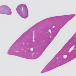 Mouse-Liver.Adrenal-gland-hematoxylin-eosin-staining-150x150