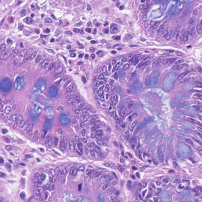 Rat-Digestive-system-HE-Alcian-Blue-staining